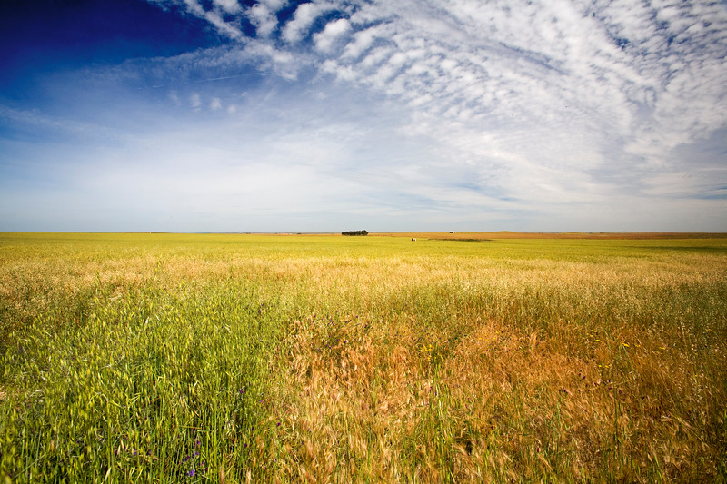 Empty landscape near Brozas, province of Caceres, Spain