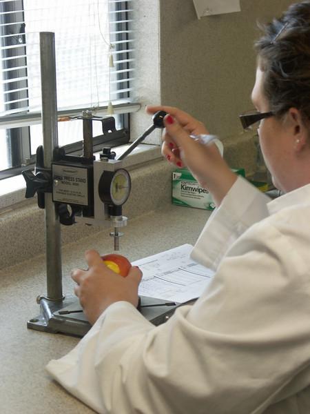 Fruit Testing