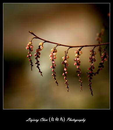 Unknown flower-20