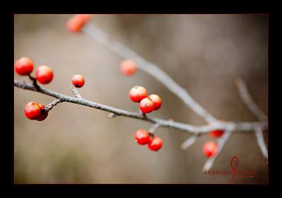 Meadow Photos