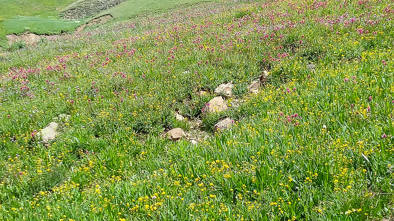 Did I say fields of Wildflowers?
