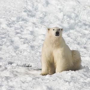 Spitsbergen 2008