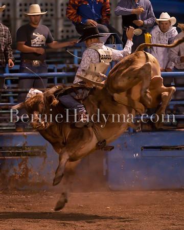 Friday- Bull Riding