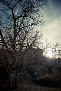 Ruine Losenstein (10.11.2012)