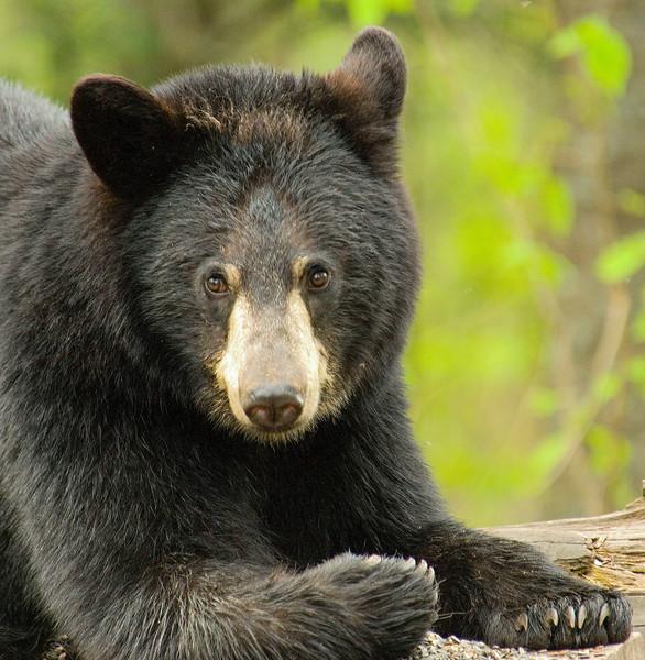 Bears-48.jpg
