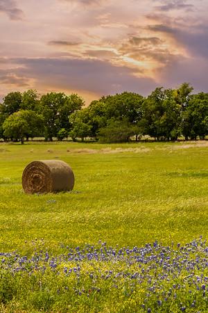 texas scenes