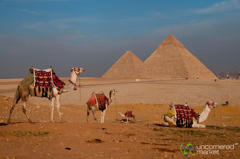Camels Waiting at Giza Pyramids - Giza, Egypt