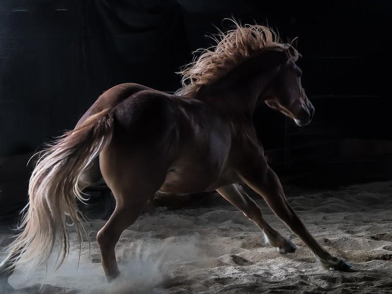 103.Jeff Armstrong.1. horse.jpg