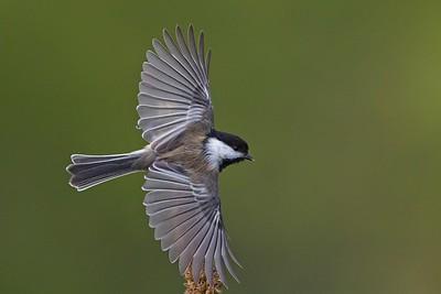 Birds - Small to Medium