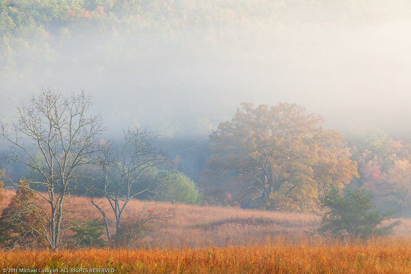 Morning Fog in Cade's Cove
