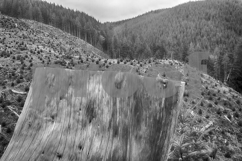 Stump & clearcut 7135_HDRb&wN.jpg
