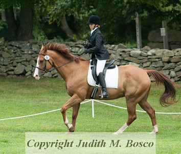 Dressage Only