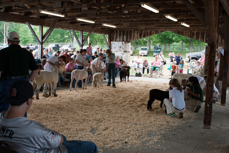 This was a sort of competition for judging the presentation of the lamb.