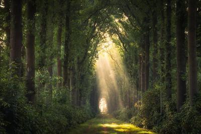 Timelapse - Zonnestralen – Onder de Gelder