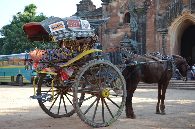 DSC_4025-horse-and-cart.JPG