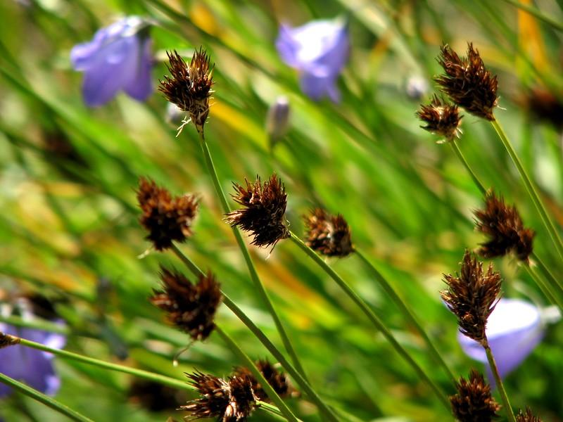 amh FLOWERS (1251).jpg