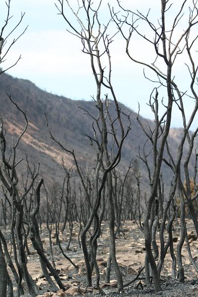 20080909-147 - LaSal Mountain Loop - 14 Fire.JPG