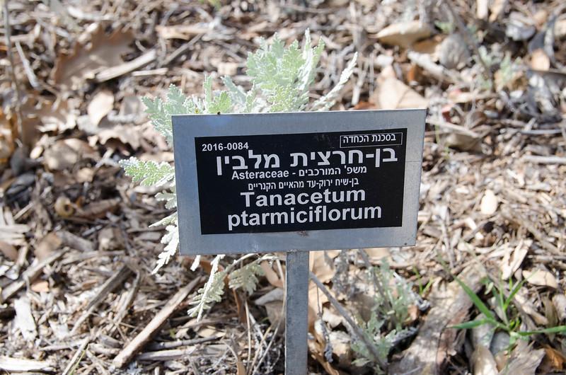 Jerusalem_1600-4026.jpg