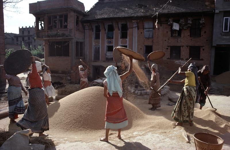 Threshing Grains