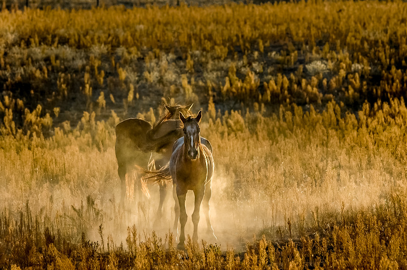 Wild Horse and Dust