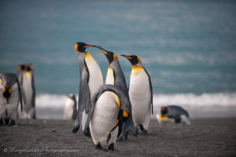 Antarctic-85