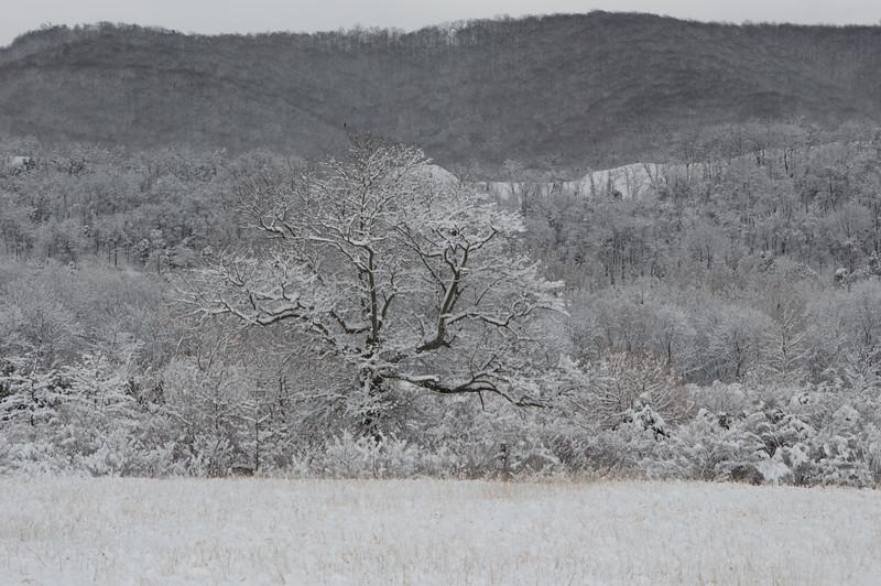 Winter.2017.March.LG.JPG-2527.jpg