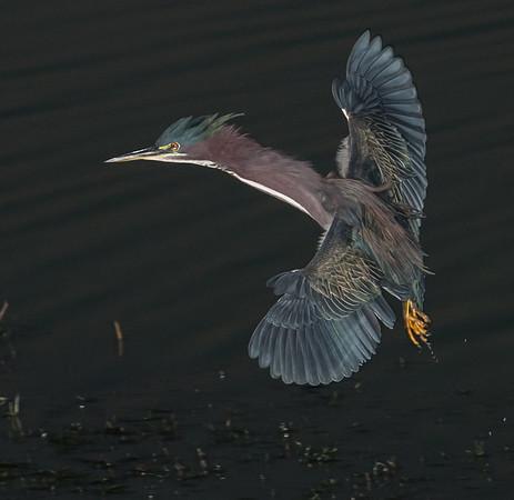 Viera Wetlands Nov 1, 2012