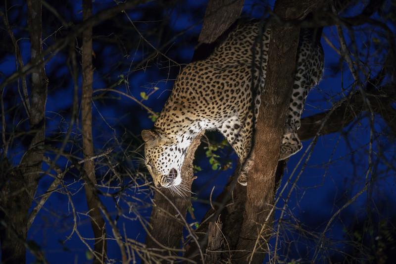 LeopardHills-20171022-1021.jpg