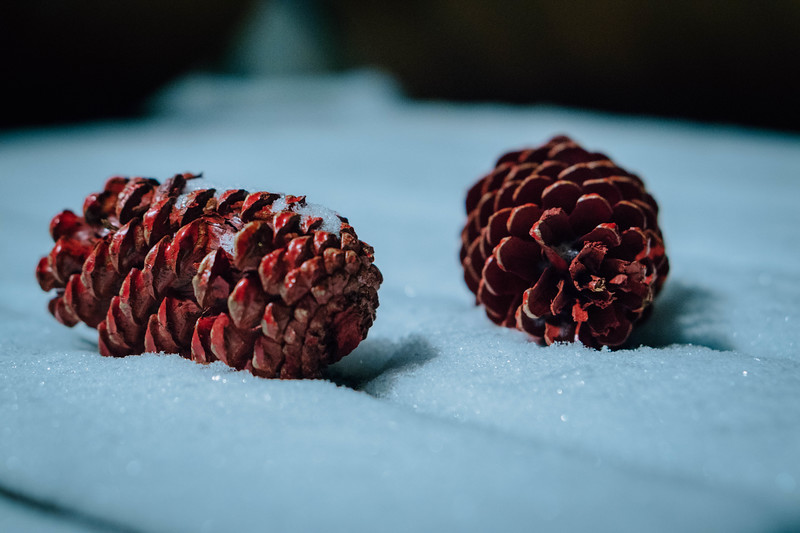 Pine cones and snow.jpg