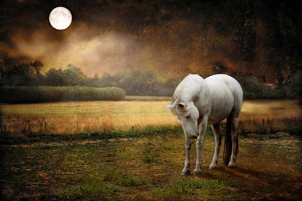 Equine Fine Art Digital Painting
