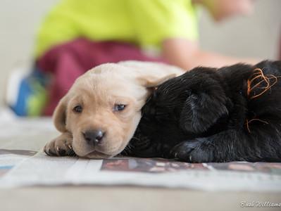 Camo's Puppies