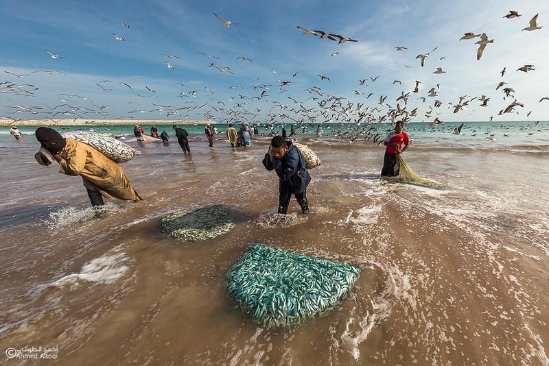 Sardine Season (56)- Dhofar.jpg