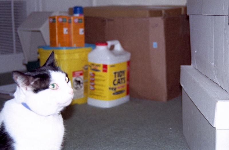2003 12 - Cats 17.jpg