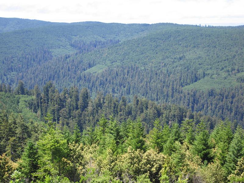 Op de voorgrond een stukje oerbos