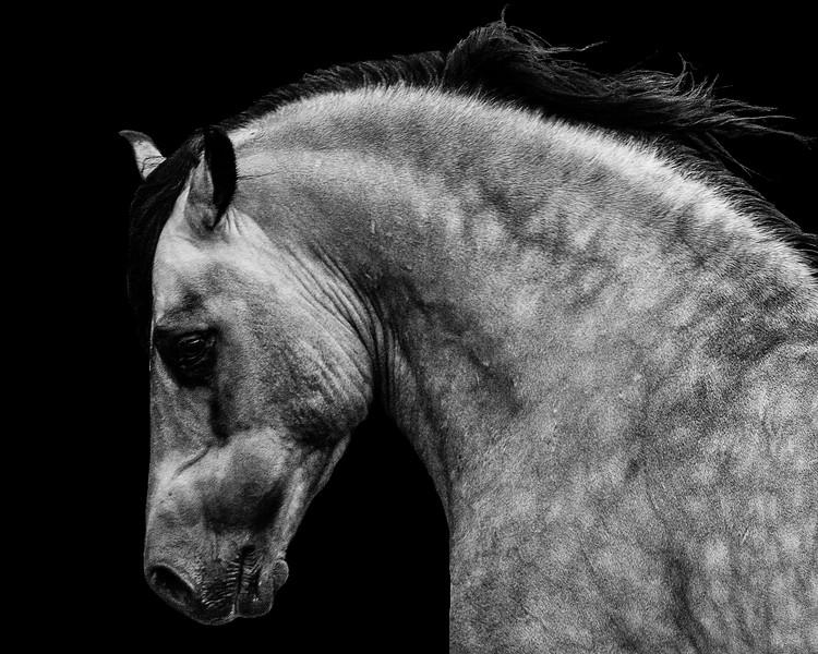 equine_NiaCorbett_1.jpg