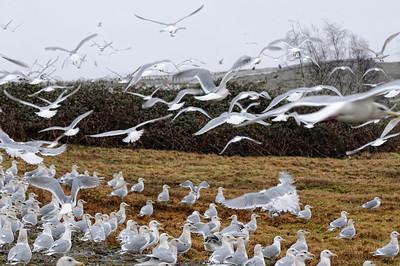 Birds found on 23 Jan 2011