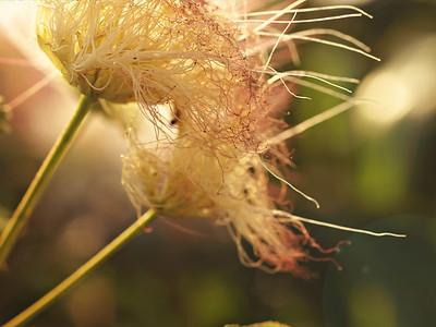 Unidentified Flora
