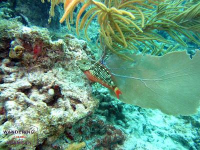 Diving off Fajardo, PR (May 2012)