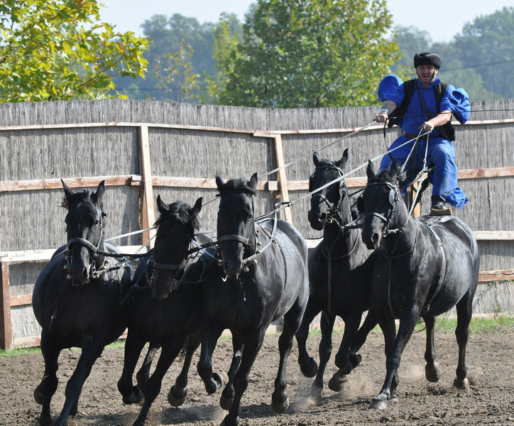 imagine driving five horses while straddling two of them!