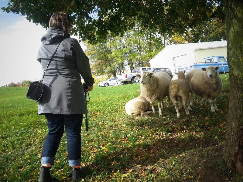 Dana shooting Sheep.jpg