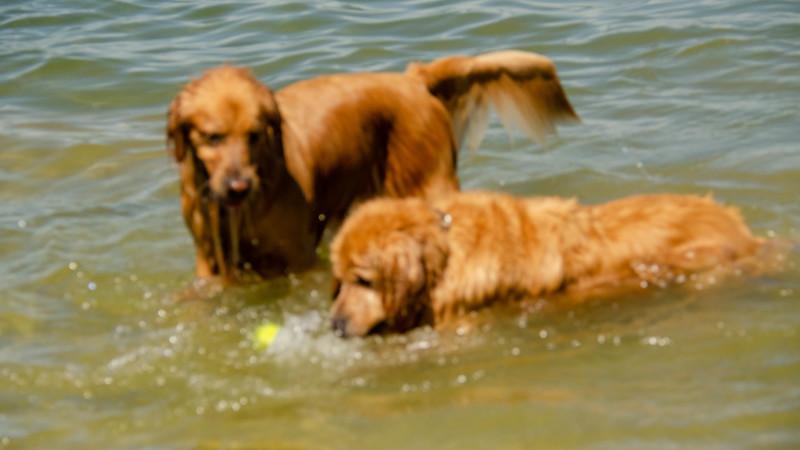 PuppyParty18-151.jpg