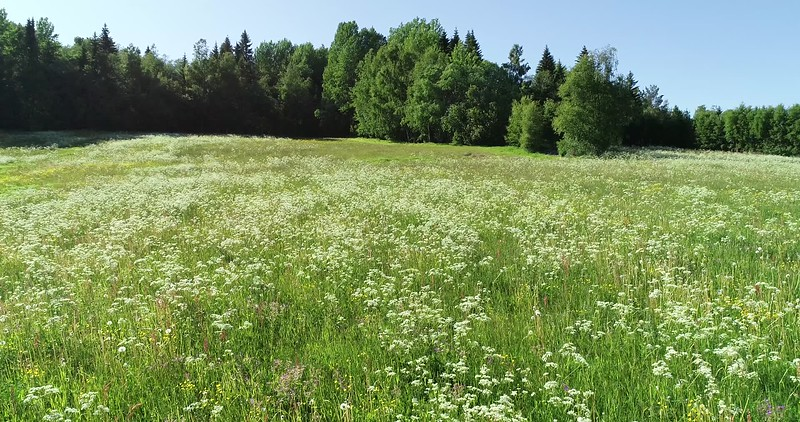 Aerial: slow flight over a flowering meadow towards the forest edge