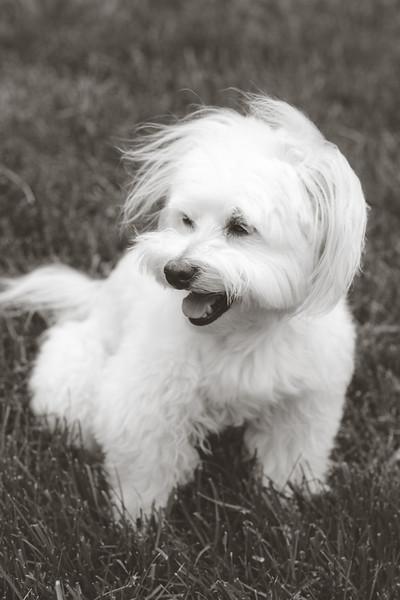 opal mike dogs (1 of 1)-83.jpg