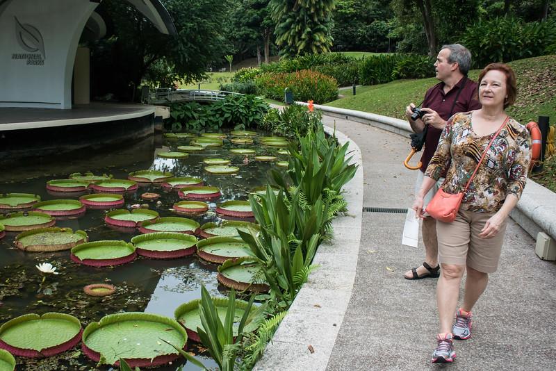 60,000 orchid plants