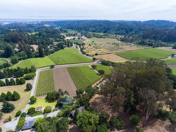 Lester Estate Winery