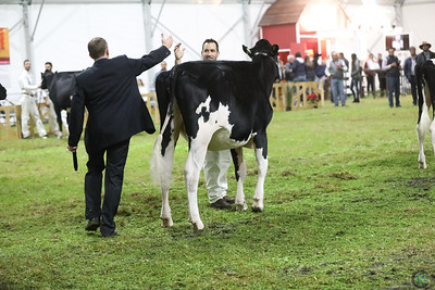 Mexico National Holstein Hfrs 2018
