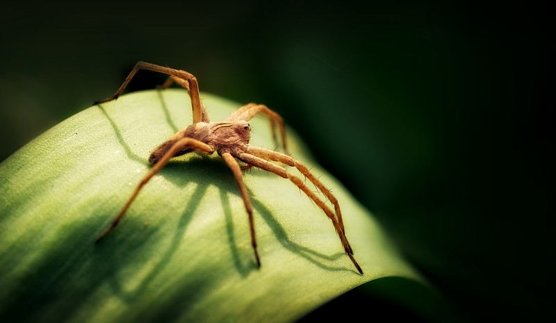 Spiders-Arachnids-086.jpg