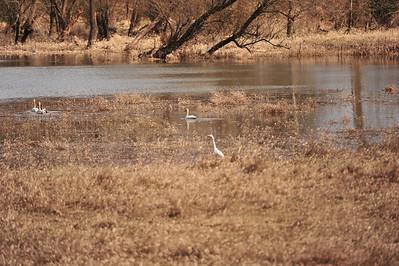 2011-03-20 Springtime Birds
