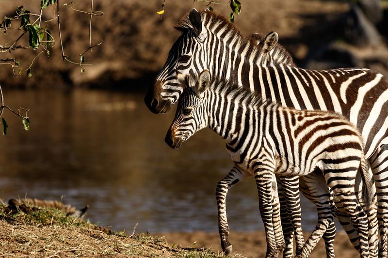 Kenya 2015-02830.jpg