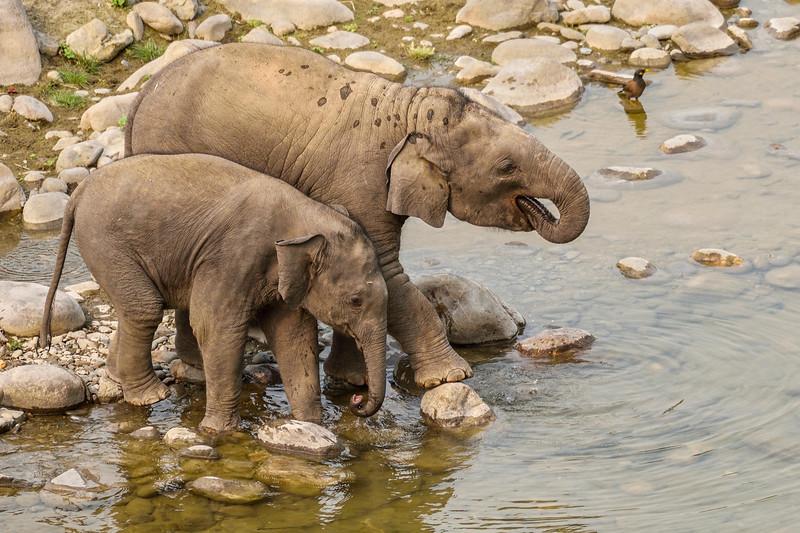 Togetherness-Siblings-Elephants-Corbett.jpg